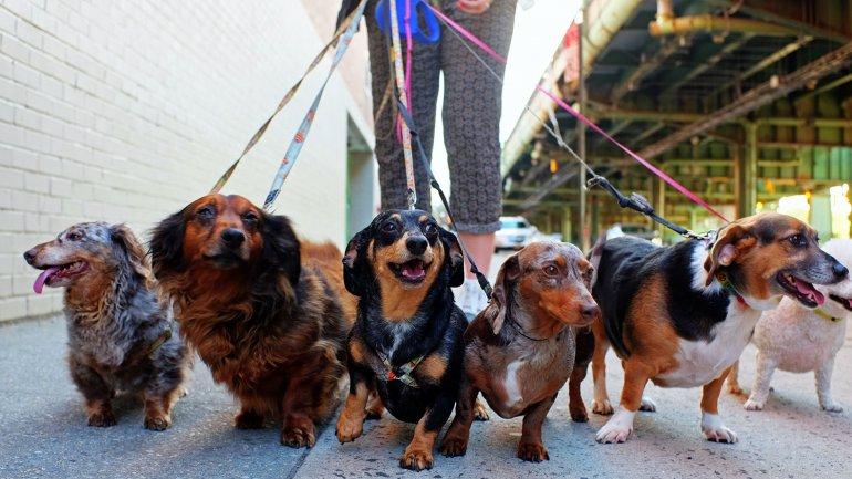 Perro dominante o sumiso: Cómo reconocerlo